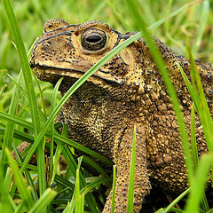 toad with warts