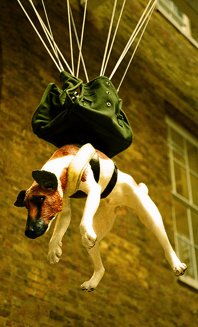 royal army parachute dog