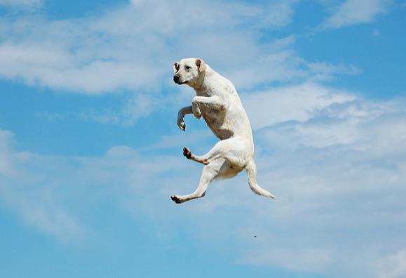 jumping-dog
