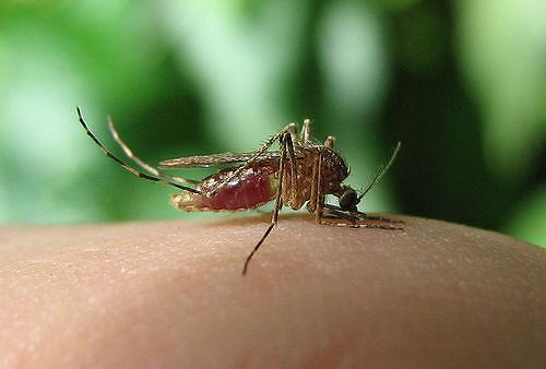 bug_biting_me